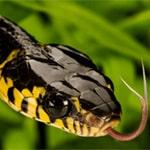 Що означає коли сниться змія?