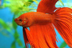 bc58d4d05d3348 Сонник акваріум з рибками до чого сниться?