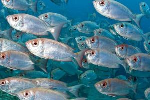 47d104c15cc477 Сонник багато риби до чого сниться?